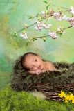 Easter baby. Little easter baby in a nest with springtime flowers Stock Photos