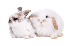 Easter baby bunnies Royalty Free Stock Photo