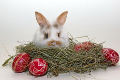 Easter baby bunny in hay and traditional painted eggs Royalty Free Stock Image