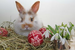 Easter baby bunny in hay and traditional painted eggs Royalty Free Stock Photography