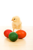 Easter baby chicken with colorful eggs Stock Photography
