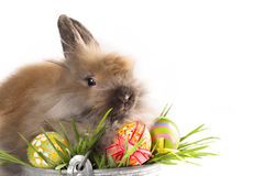 Easter - Baby Rabbits And Easter Eggs Royalty Free Stock Photos