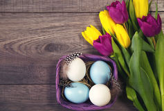 Easter background with blue and white eggs in nest and purple and yellow tulips Royalty Free Stock Photo