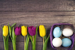 Easter background with blue and white eggs in nest and purple and yellow tulips Stock Images