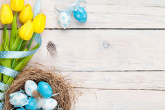 Easter background with blue and white eggs in nest and yellow tu. Lips. Top view with copy space Stock Photos