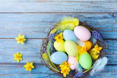 Easter background with colorful eggs in nest, feather and spring flowers top view. Holiday card or banner.  royalty free stock image