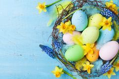 Easter background with colorful eggs in nest, feather and spring flowers top view. Holiday card or banner.  stock photos