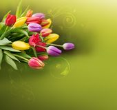 Spring colorful tulips isolated on green bacground. Easter background with colorful tulips. Holiday card with copy space, on green background Royalty Free Stock Photos