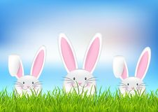 Easter bunny background stock images