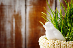 Easter background with cute white bird Royalty Free Stock Photos