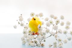 Easter background with easter decoration chicken. Easter decor chicken in white flowers Royalty Free Stock Image