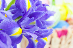 Easter background,  Easter eggs in a basket and spring flowers Royalty Free Stock Photography