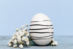 Easter background with a egg and white flowers on blue paper. A Easter egg with black stripes on blue wooden table and white flowers Stock Photo