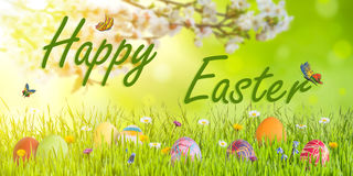 Easter Background with Eggs and Blooming Branch Stock Photo