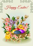 Easter background with eggs and flowers Stock Images