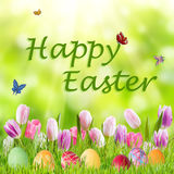 Easter Background with Eggs and Flowers Royalty Free Stock Photo