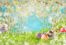 Easter background with eggs, fluffy rabbit on grass, flowers and  spring blossom nature. Place for text Stock Photography