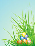 Easter background with the eggs and grass. Easter colorful eggs is in the spring green grass Royalty Free Stock Photo