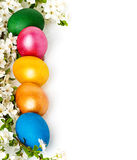 Easter background with eggs and spring flowers Royalty Free Stock Photos