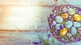 Easter background with Easter eggs and spring flowers. Top view with copy space. Easter background with Easter blue and gold eggs, pussy-willow and spring stock photo