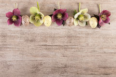 Easter background frame with spring flowers and easter eggs vintage style Copy space Royalty Free Stock Images
