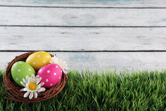 Easter background with grass. Easter eggs on wood backgrpund Stock Image