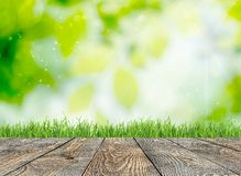 Easter. Background grass focus spring field fresh Royalty Free Stock Images
