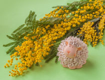 Easter background with mimosa Stock Images