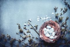 Easter background with nest of bird eggs,feathers and spring twigs and flowers. Blue toned Stock Photos
