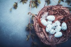 Easter background with nest of bird eggs,feathers and spring twigs , top view, place for text. Blue toned Stock Photography
