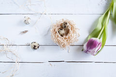 Easter background with quail eggs in nest and pink tulip Stock Image