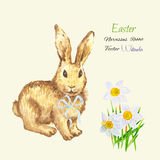 Easter background with rabbit Royalty Free Stock Image