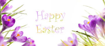 easter background with spring flowers Stock Photo