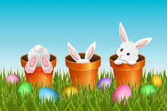 Easter background with three adorable white rabbits. Easter background, three adorable white rabbits in flower pots and colorful eggs in green grass. Vector stock illustration