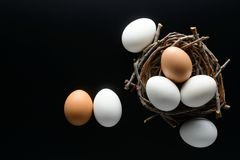 White and brown eggs in a nest from branches on black background. Easter background. White and brown eggs in a nest from branches on black background stock photo