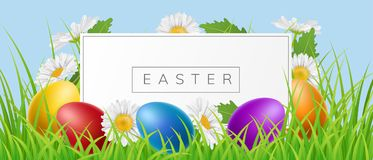 Easter banner frame with eggs and daisy in grass. Easter frame in nature with grass, white daisy flower and colorful Easter eggs. Vector illustration for spring Stock Photo