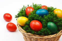 Easter basket. With painted eggs on the mosses coating royalty free stock photography
