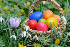 Easter basket. With colorful eggs in the grass Royalty Free Stock Photo
