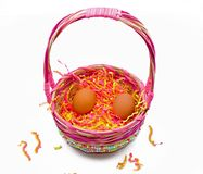 Easter basket. A pastel colored easter basket with two brown eggs royalty free stock image