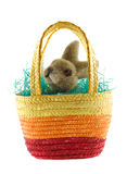 Easter basket with bunny Stock Images