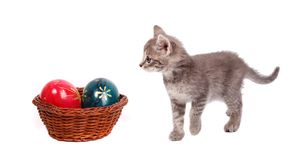 Easter basket and cat Stock Photos