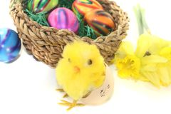 Easter Basket with chick and colorful eggs. On a light background Royalty Free Stock Photo
