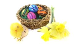 Easter Basket with chick and eggs. On a light background Royalty Free Stock Image