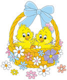 Easter basket with chicks Royalty Free Stock Photography