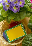 Easter basket with colored eggs and primrose. Stock Photo