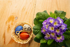 Easter basket with colored eggs and primrose. Royalty Free Stock Images