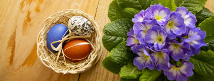 Easter basket with colored eggs and primrose. Royalty Free Stock Image
