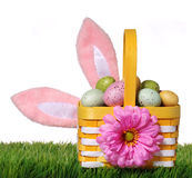 Easter basket with colorful eggs and bunny ears on green grass i Stock Photo