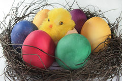 Easter basket with Easter eggs and chicks Royalty Free Stock Images
