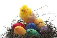 Easter basket with Easter eggs and chicks. On a white background royalty free stock images